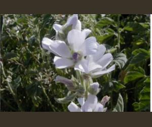 Echantillon gratuit : Graines de fleurs