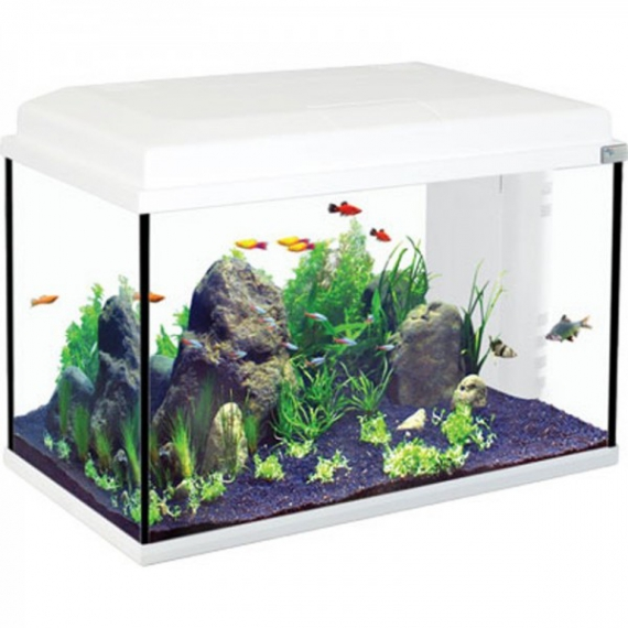 petit aquarium pas cher occasion. Black Bedroom Furniture Sets. Home Design Ideas