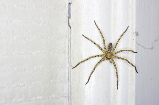 comment lutter contre les araignées dans la maison ?